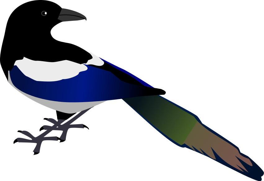 en skade fugl